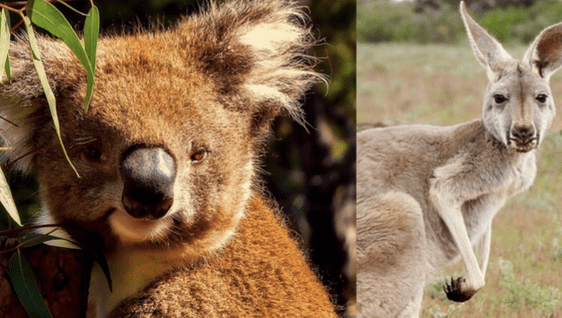 £565 flights from London to Sydney